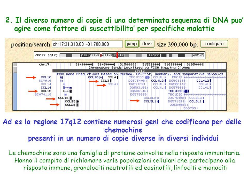 2. Il diverso numero di copie di una determinata sequenza di DNA puo' agire come fattore di suscettibilita' per specifiche malattie Ad es la regione 1