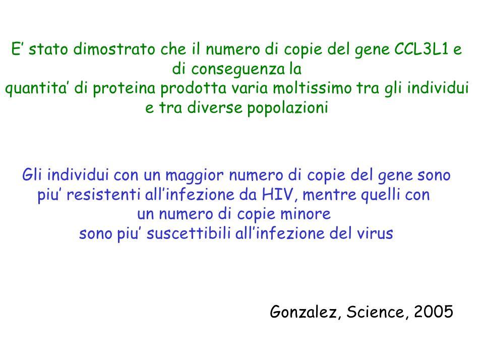 Gonzalez, Science, 2005 E' stato dimostrato che il numero di copie del gene CCL3L1 e di conseguenza la quantita' di proteina prodotta varia moltissimo
