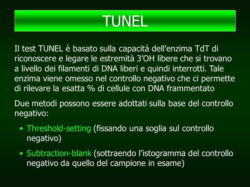 Il test TUNEL è basato sulla capacità dell'enzima TdT di riconoscere e legare le estremità 3'OH libere che si trovano a livello dei filamenti di DNA liberi e quindi interrotti.