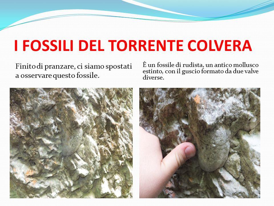 I FOSSILI DEL TORRENTE COLVERA Finito di pranzare, ci siamo spostati a osservare questo fossile.