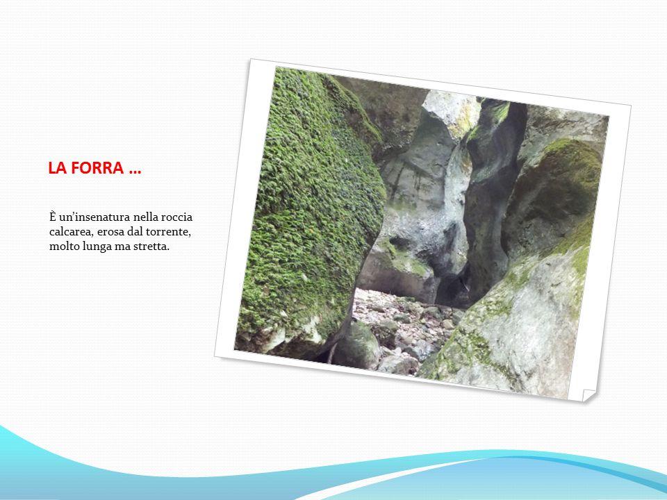 LA FORRA … È un'insenatura nella roccia calcarea, erosa dal torrente, molto lunga ma stretta.