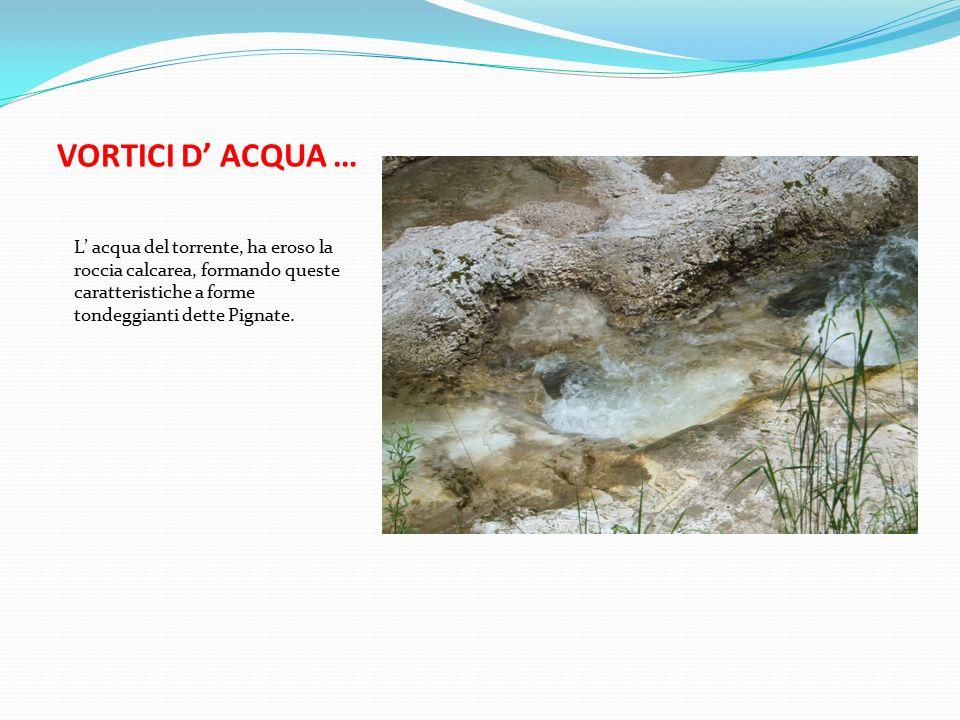 VORTICI D' ACQUA … L' acqua del torrente, ha eroso la roccia calcarea, formando queste caratteristiche a forme tondeggianti dette Pignate.