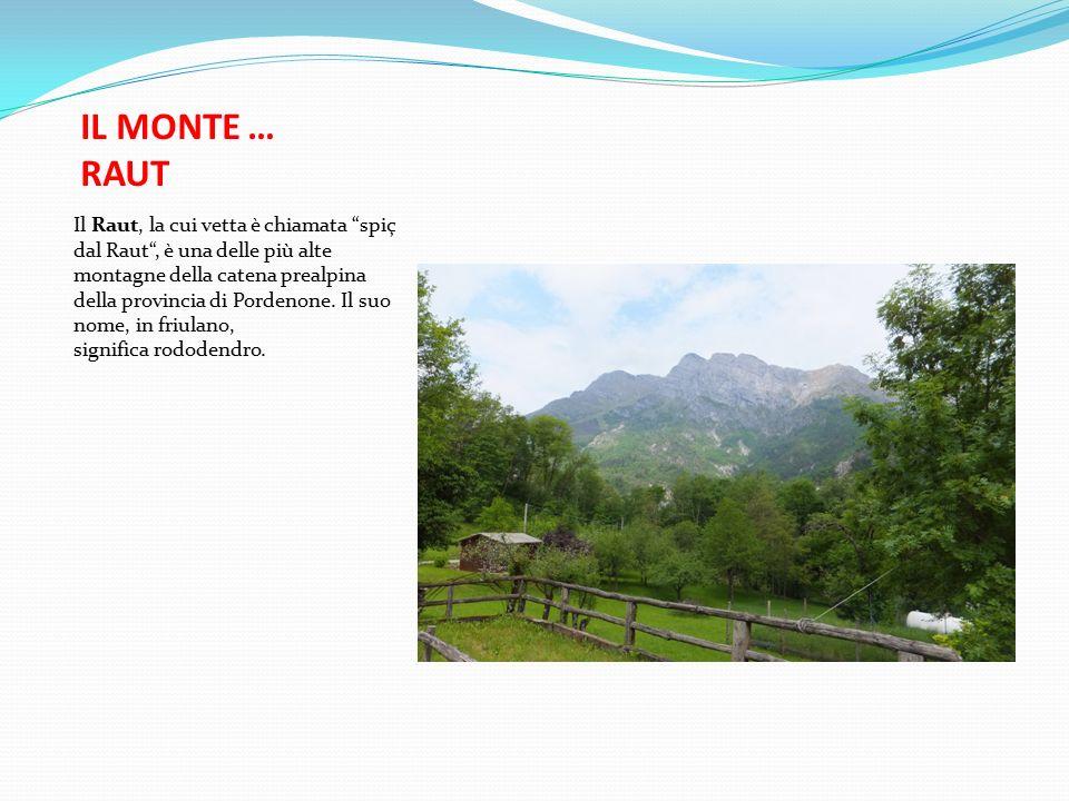 IL MONTE … RAUT Il Raut, la cui vetta è chiamata spiç dal Raut , è una delle più alte montagne della catena prealpina della provincia di Pordenone.