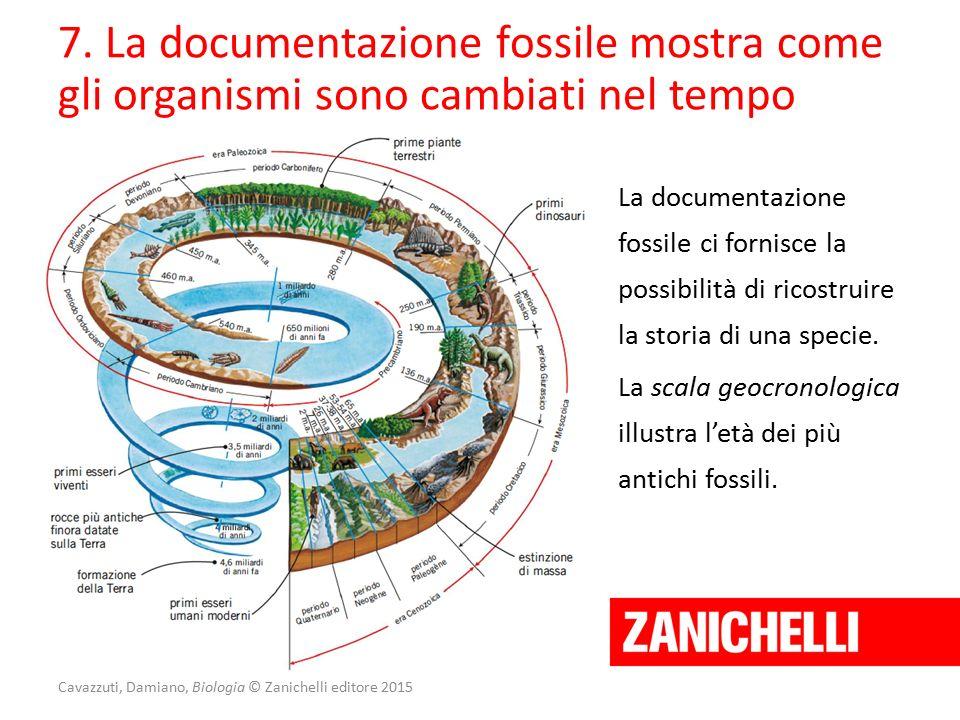 7. La documentazione fossile mostra come gli organismi sono cambiati nel tempo La documentazione fossile ci fornisce la possibilità di ricostruire la