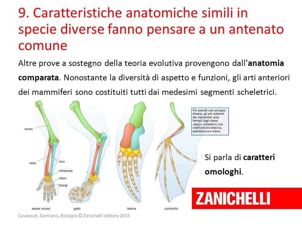 Cavazzuti, Damiano, Biologia © Zanichelli editore 2015 9. Caratteristiche anatomiche simili in specie diverse fanno pensare a un antenato comune Altre