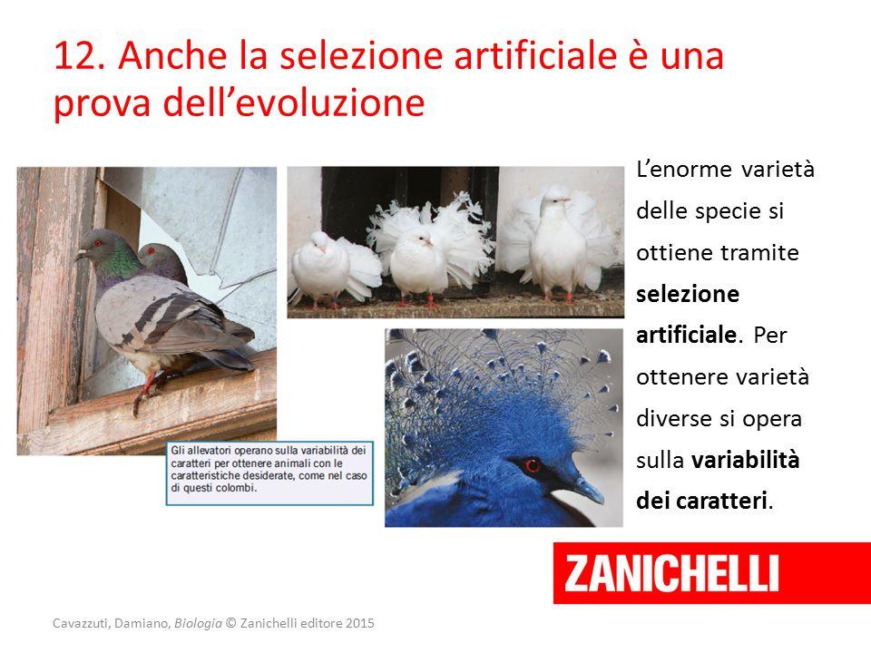 Cavazzuti, Damiano, Biologia © Zanichelli editore 2015 12. Anche la selezione artificiale è una prova dell'evoluzione L'enorme varietà delle specie si