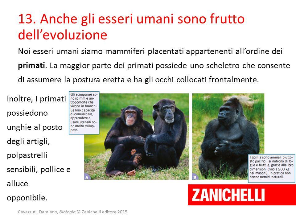 Noi esseri umani siamo mammiferi placentati appartenenti all'ordine dei primati. La maggior parte dei primati possiede uno scheletro che consente di a