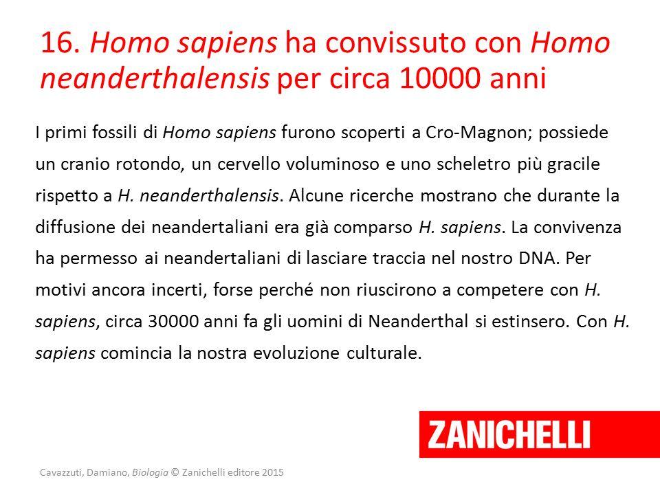 Cavazzuti, Damiano, Biologia © Zanichelli editore 2015 16. Homo sapiens ha convissuto con Homo neanderthalensis per circa 10000 anni I primi fossili d