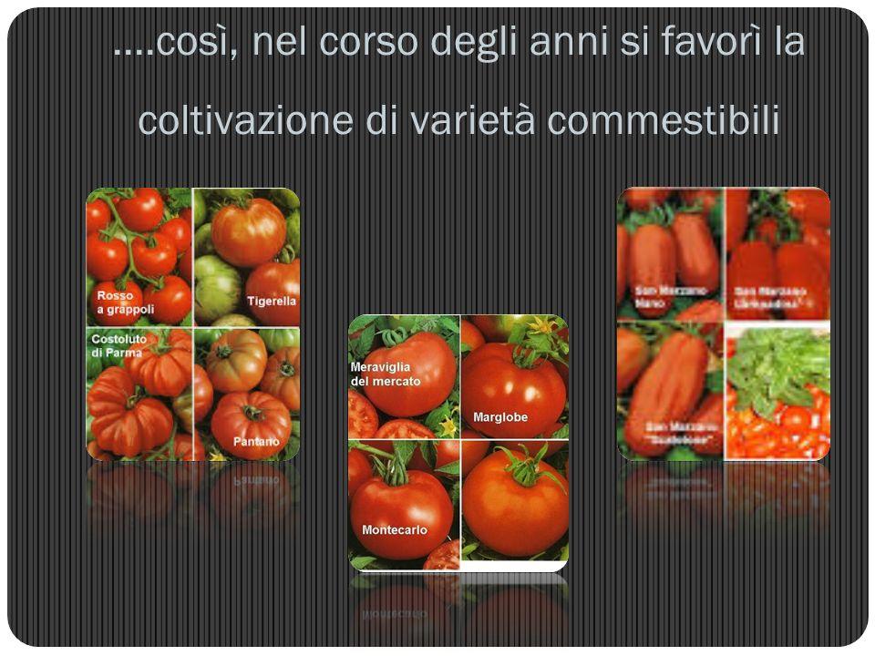 ....così, nel corso degli anni si favorì la coltivazione di varietà commestibili