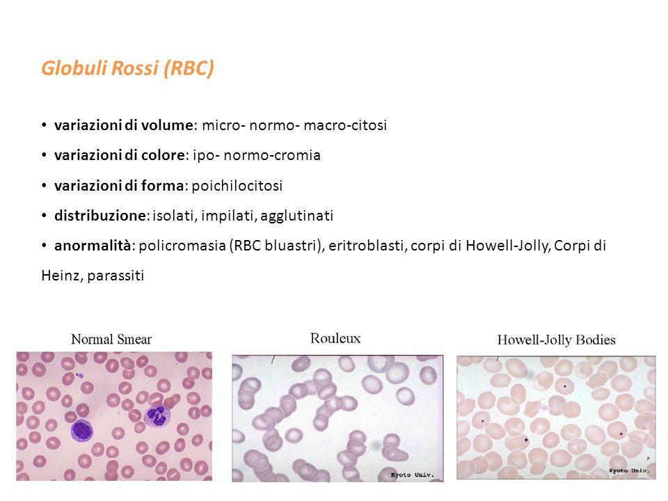 Globuli Rossi (RBC) variazioni di volume: micro- normo- macro-citosi variazioni di colore: ipo- normo-cromia variazioni di forma: poichilocitosi distribuzione: isolati, impilati, agglutinati anormalità: policromasia (RBC bluastri), eritroblasti, corpi di Howell-Jolly, Corpi di Heinz, parassiti