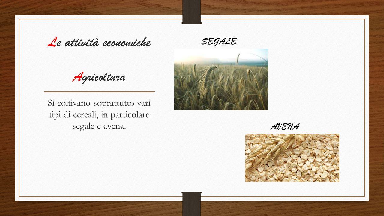 Le attività economiche Agricoltura Si coltivano soprattutto vari tipi di cereali, in particolare segale e avena. SEGALE AVENA