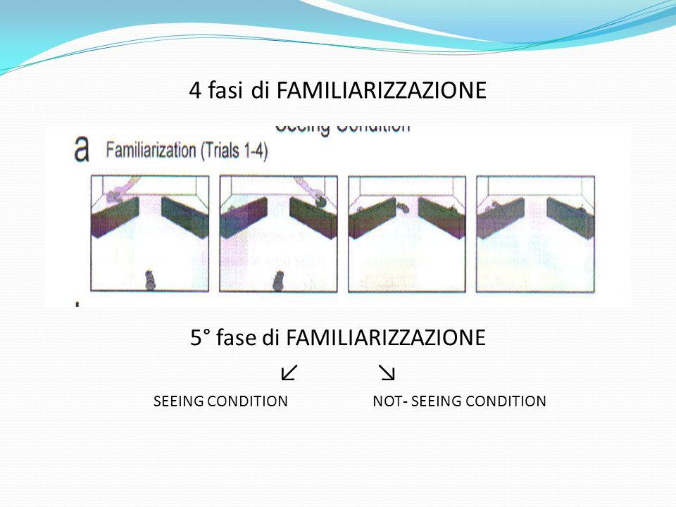 4 fasi di FAMILIARIZZAZIONE 5° fase di FAMILIARIZZAZIONE ↙ ↘ SEEING CONDITION NOT- SEEING CONDITION
