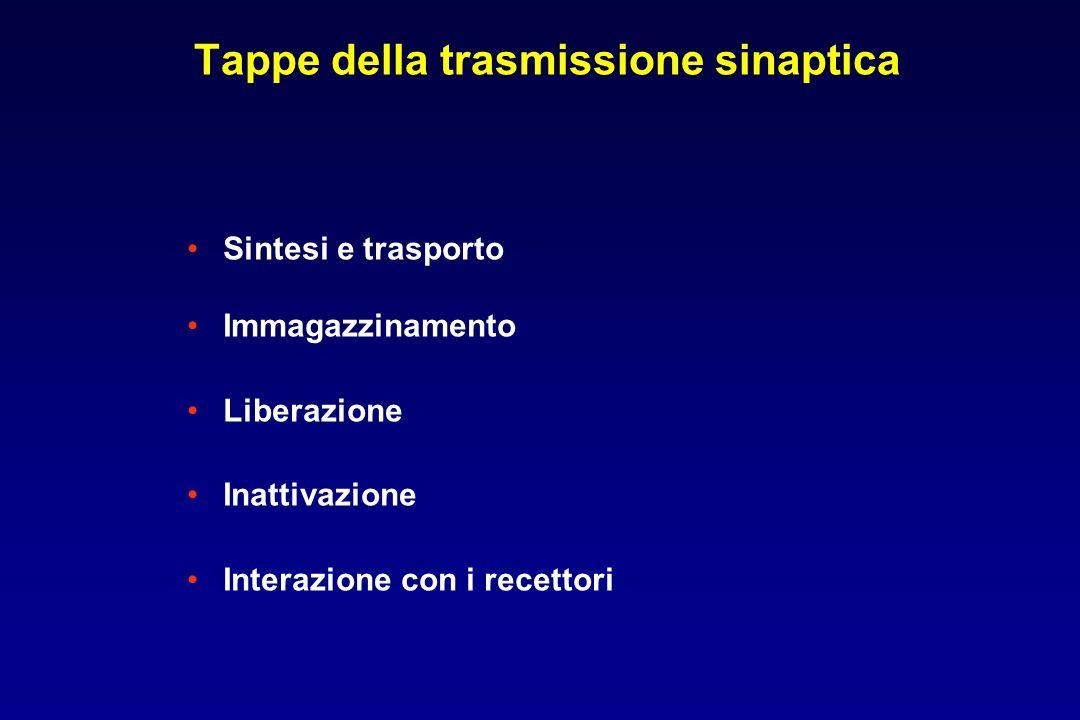 Tappe della trasmissione sinaptica Sintesi e trasporto Immagazzinamento Liberazione Inattivazione Interazione con i recettori