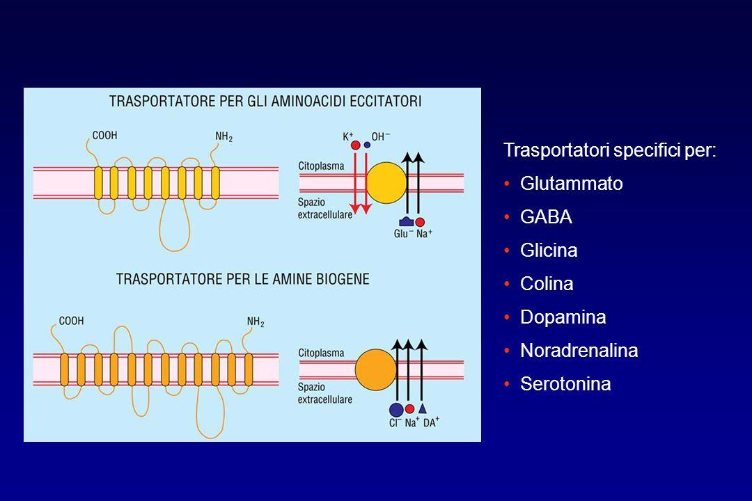 Trasportatori specifici per: Glutammato GABA Glicina Colina Dopamina Noradrenalina Serotonina