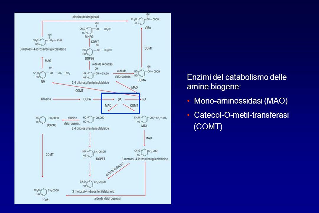 Enzimi del catabolismo delle amine biogene: Mono-aminossidasi (MAO) Catecol-O-metil-transferasi (COMT)