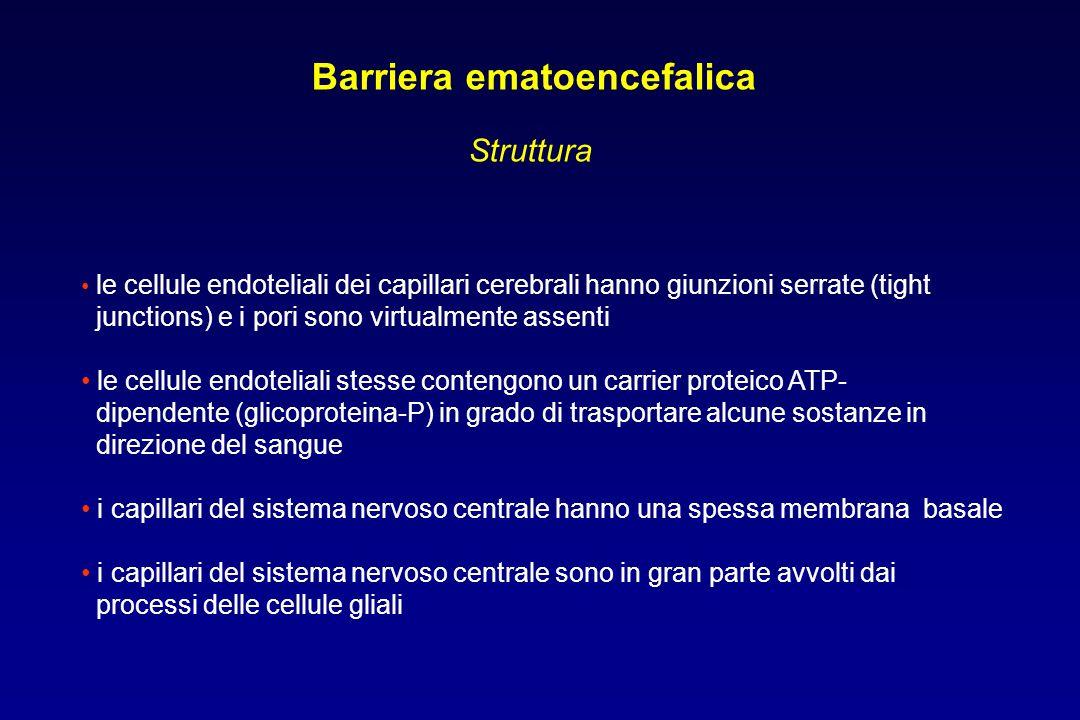 Barriera ematoencefalica Struttura le cellule endoteliali dei capillari cerebrali hanno giunzioni serrate (tight junctions) e i pori sono virtualmente