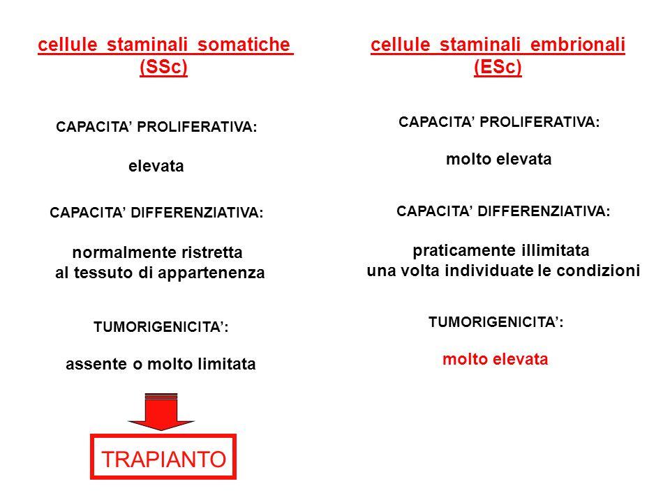 cellule staminali somatiche (SSc) cellule staminali embrionali (ESc) CAPACITA' PROLIFERATIVA: elevata CAPACITA' PROLIFERATIVA: molto elevata CAPACITA'