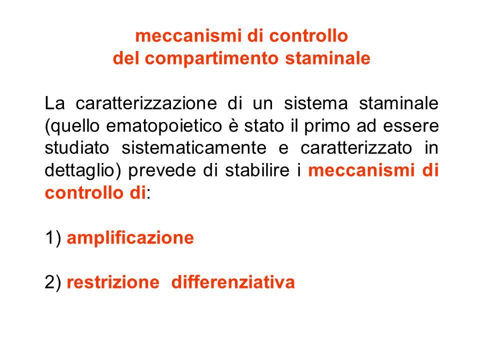 meccanismi di controllo del compartimento staminale La caratterizzazione di un sistema staminale (quello ematopoietico è stato il primo ad essere stud