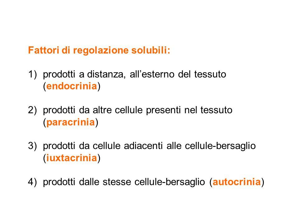 Fattori di regolazione solubili: 1)prodotti a distanza, all'esterno del tessuto (endocrinia) 2)prodotti da altre cellule presenti nel tessuto (paracri