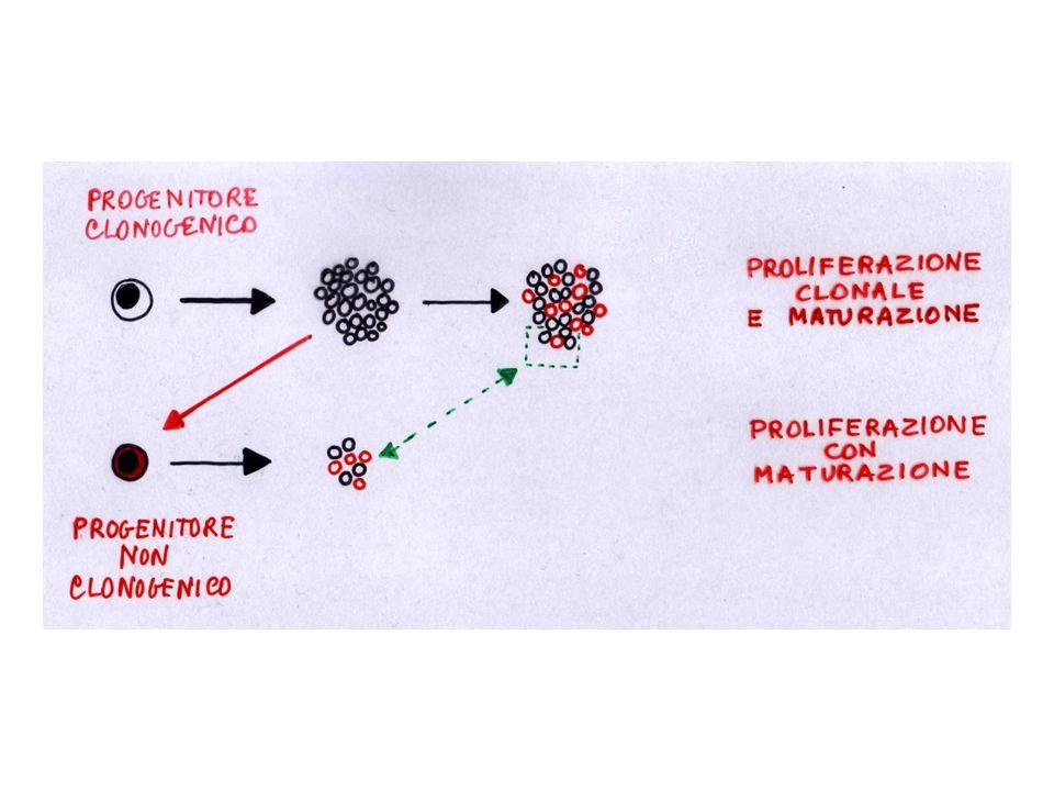 Fattori di regolazione solubili: 1)prodotti a distanza, all'esterno del tessuto (endocrinia) 2)prodotti da altre cellule presenti nel tessuto (paracrinia) 3)prodotti da cellule adiacenti alle cellule-bersaglio (iuxtacrinia) 4)prodotti dalle stesse cellule-bersaglio (autocrinia)