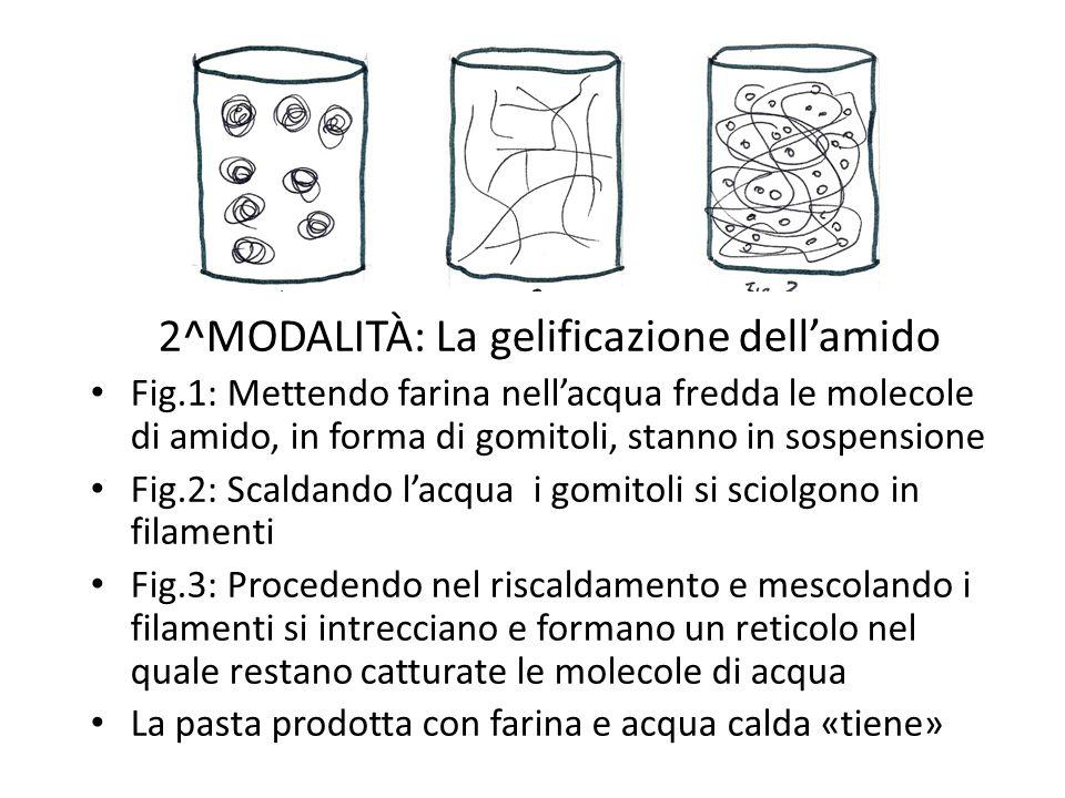2^MODALITÀ: La gelificazione dell'amido Fig.1: Mettendo farina nell'acqua fredda le molecole di amido, in forma di gomitoli, stanno in sospensione Fig