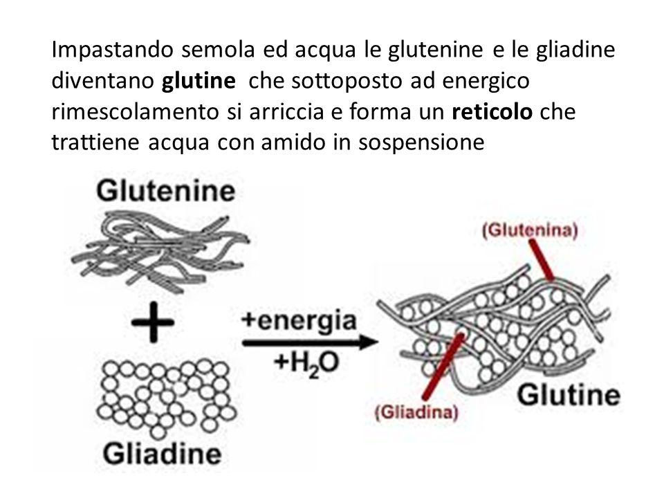 Impastando semola ed acqua le glutenine e le gliadine diventano glutine che sottoposto ad energico rimescolamento si arriccia e forma un reticolo che