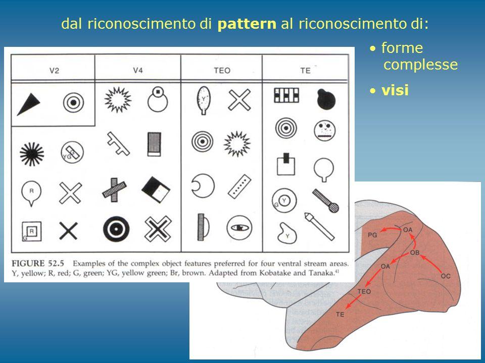 dal riconoscimento di pattern al riconoscimento di: forme complesse visi
