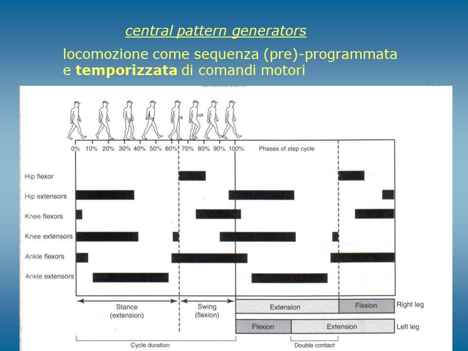 central pattern generators locomozione come sequenza (pre)-programmata e temporizzata di comandi motori