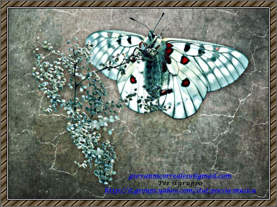 Io ti aspetto, io ti adoro, io ti amo piccola farfalla. Piccola farfalla venuta dal mare, mio amore mio fiore della vita, fiore di vecchia solitudine