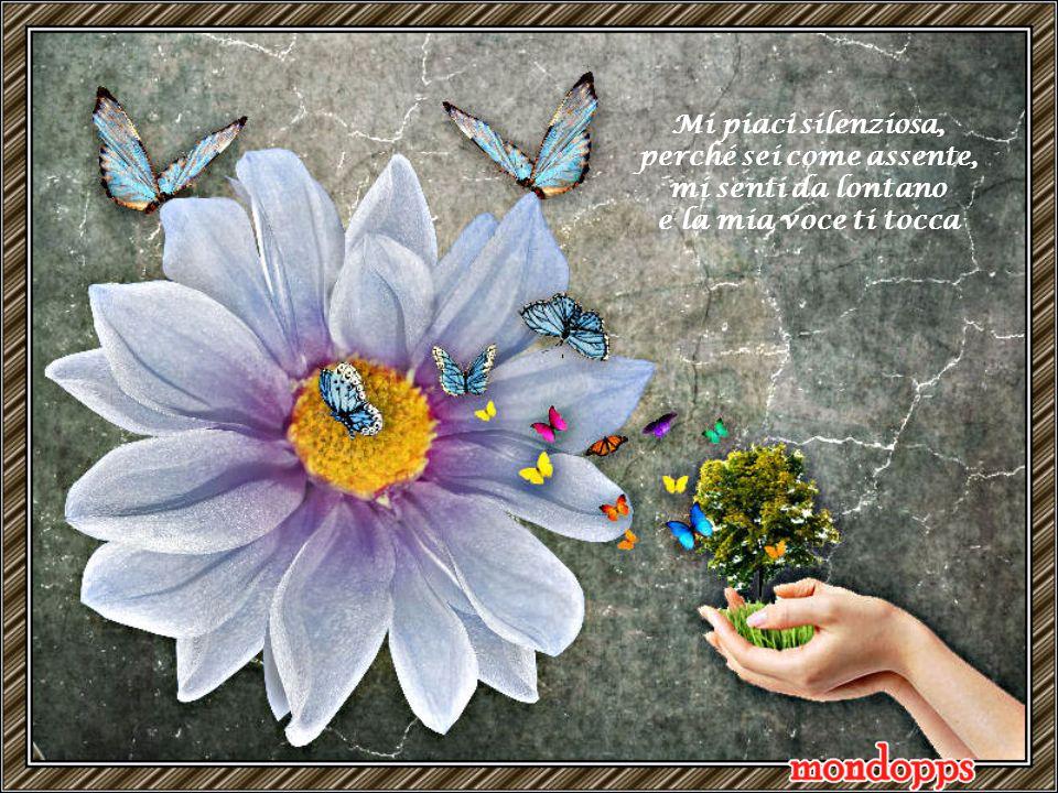 Io ti aspetto, io ti adoro, io ti amo piccola farfalla.