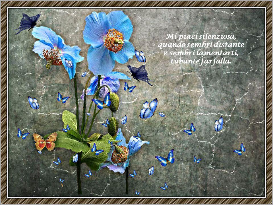 Farfalla di sogno, assomigli alla mia anima ed assomigli alla parola malinconia.