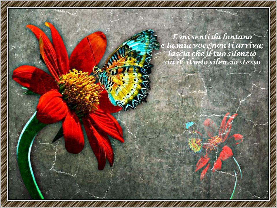 Mi piaci silenziosa, quando sembri distante e sembri lamentarti, tubante farfalla.