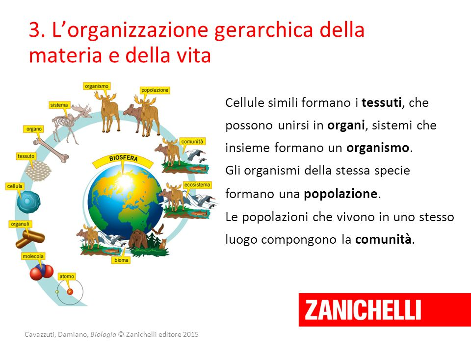 Cavazzuti, Damiano, Biologia © Zanichelli editore 2015 3. L'organizzazione gerarchica della materia e della vita Cellule simili formano i tessuti, che