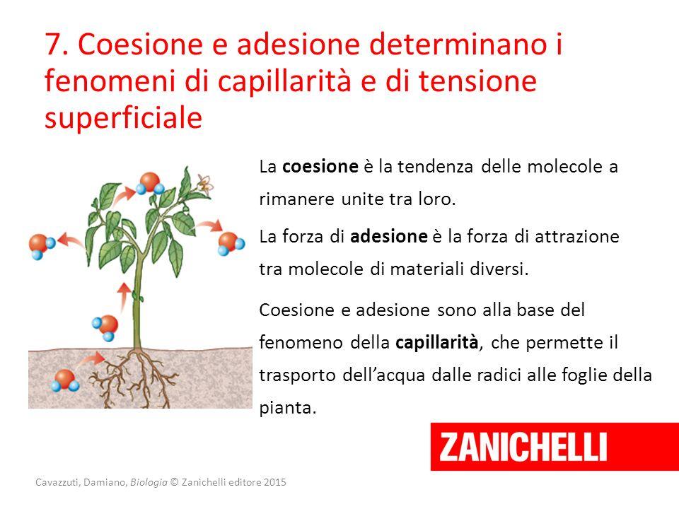 Cavazzuti, Damiano, Biologia © Zanichelli editore 2015 7. Coesione e adesione determinano i fenomeni di capillarità e di tensione superficiale La coes