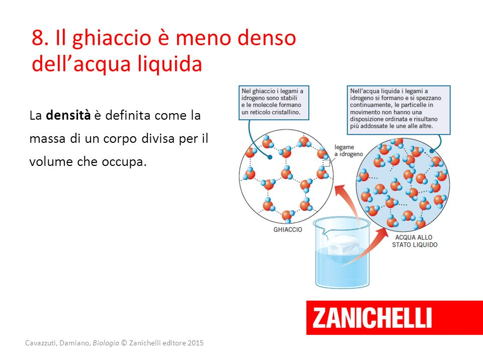 Cavazzuti, Damiano, Biologia © Zanichelli editore 2015 8. Il ghiaccio è meno denso dell'acqua liquida La densità è definita come la massa di un corpo
