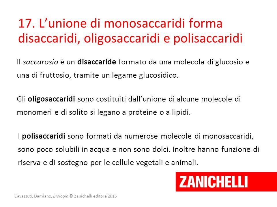 Cavazzuti, Damiano, Biologia © Zanichelli editore 2015 17. L'unione di monosaccaridi forma disaccaridi, oligosaccaridi e polisaccaridi Il saccarosio è