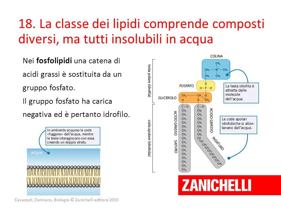 Cavazzuti, Damiano, Biologia © Zanichelli editore 2015 18. La classe dei lipidi comprende composti diversi, ma tutti insolubili in acqua Nei fosfolipi