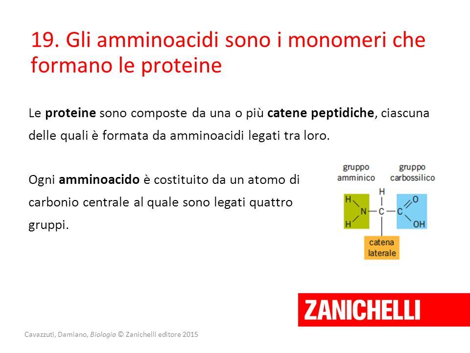 19. Gli amminoacidi sono i monomeri che formano le proteine Le proteine sono composte da una o più catene peptidiche, ciascuna delle quali è formata d