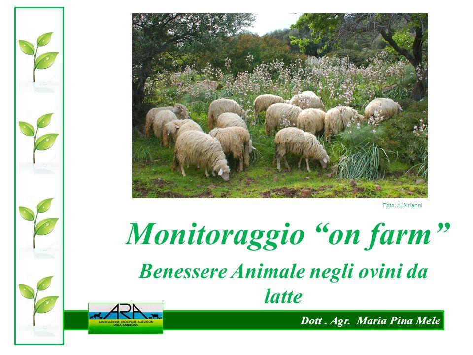 """Dott. Agr. Maria Pina Mele Monitoraggio """"on farm"""" Benessere Animale negli ovini da latte Foto: A. Sirianni"""