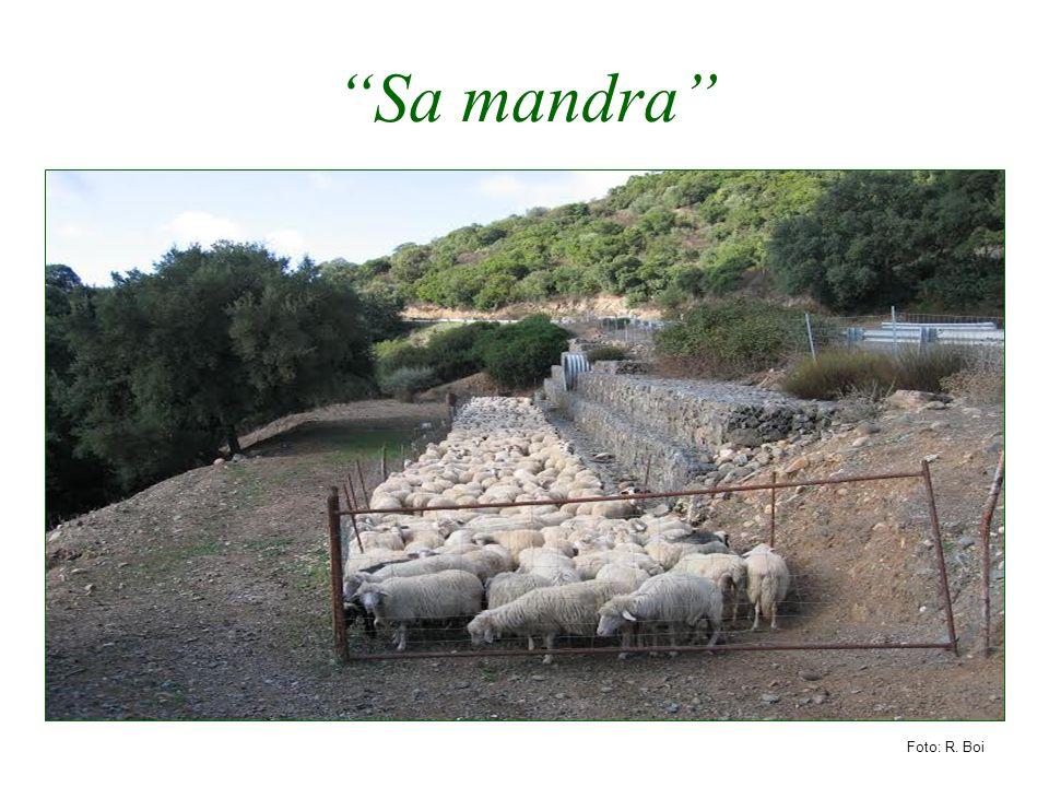 """""""Sa mandra"""" Foto: R. Boi"""