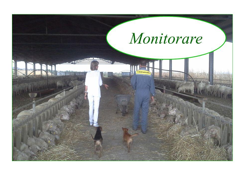 Monitorare