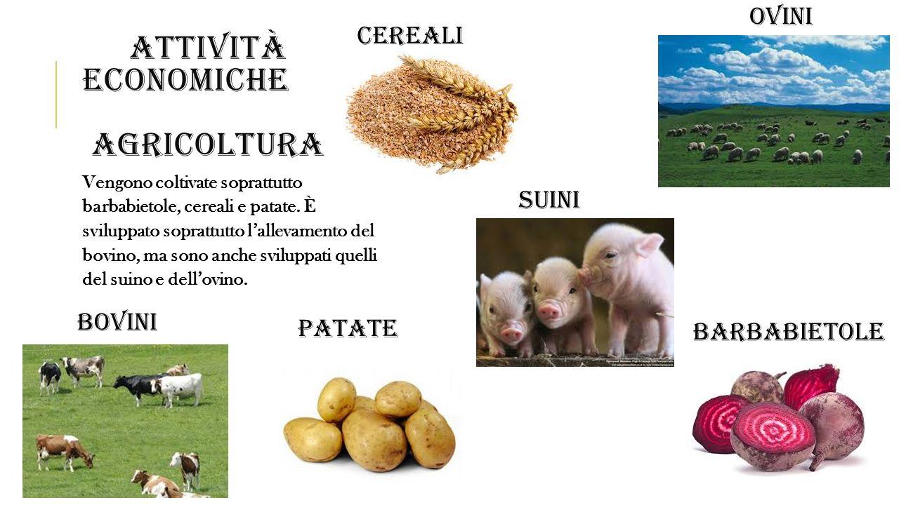 ATTIVITÀ ECONOMICHE AGRICOLTURA Vengono coltivate soprattutto barbabietole, cereali e patate. È sviluppato soprattutto l'allevamento del bovino, ma so