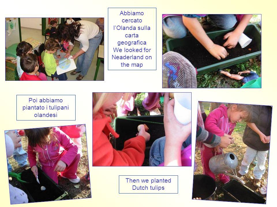 Abbiamo cercato l'Olanda sulla carta geografica We looked for Neaderland on the map Poi abbiamo piantato i tulipani olandesi Then we planted Dutch tulips