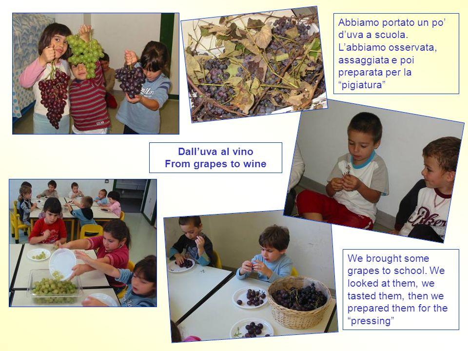 """Abbiamo portato un po' d'uva a scuola. L'abbiamo osservata, assaggiata e poi preparata per la """"pigiatura"""" Dall'uva al vino From grapes to wine We brou"""