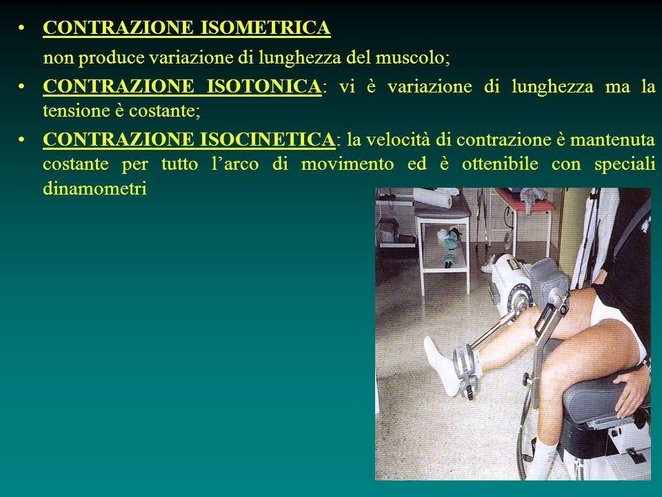 CONTRAZIONE ISOMETRICA non produce variazione di lunghezza del muscolo; CONTRAZIONE ISOTONICA: vi è variazione di lunghezza ma la tensione è costante; CONTRAZIONE ISOCINETICA: la velocità di contrazione è mantenuta costante per tutto l'arco di movimento ed è ottenibile con speciali dinamometri