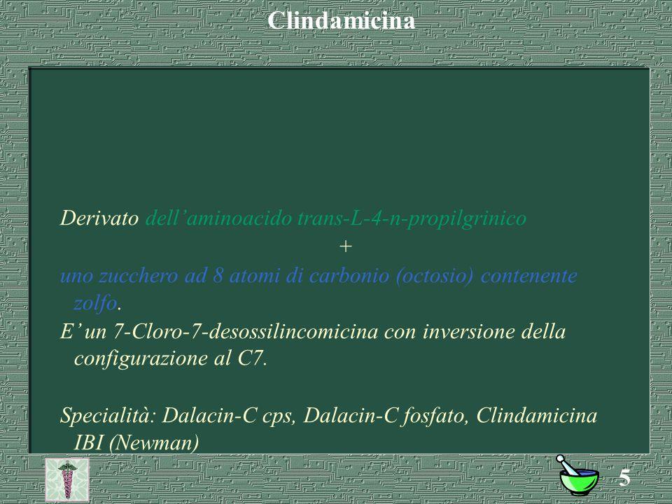 4 Composta da un aminoacido (n-metil-prolina) + uno zucchero (piranosio) Specialità: Lincocin (i.m.); cillimicina.(Newman) Lincomicina