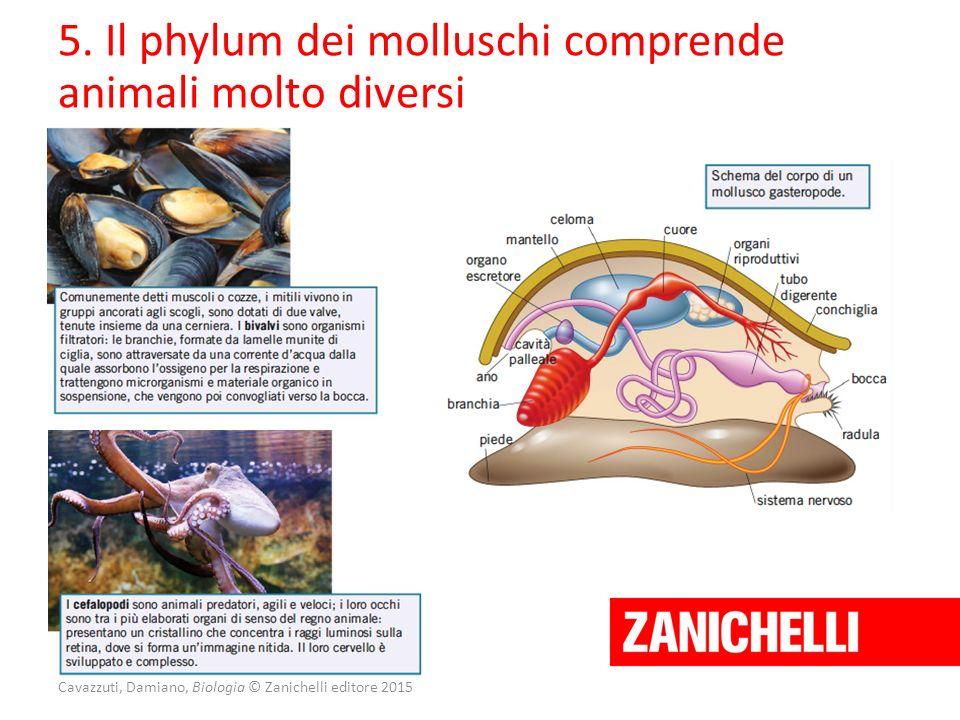 Cavazzuti, Damiano, Biologia © Zanichelli editore 2015 5. Il phylum dei molluschi comprende animali molto diversi