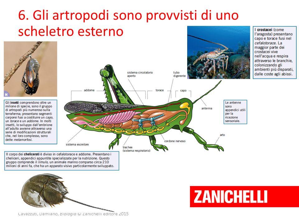 Cavazzuti, Damiano, Biologia © Zanichelli editore 2015 6. Gli artropodi sono provvisti di uno scheletro esterno