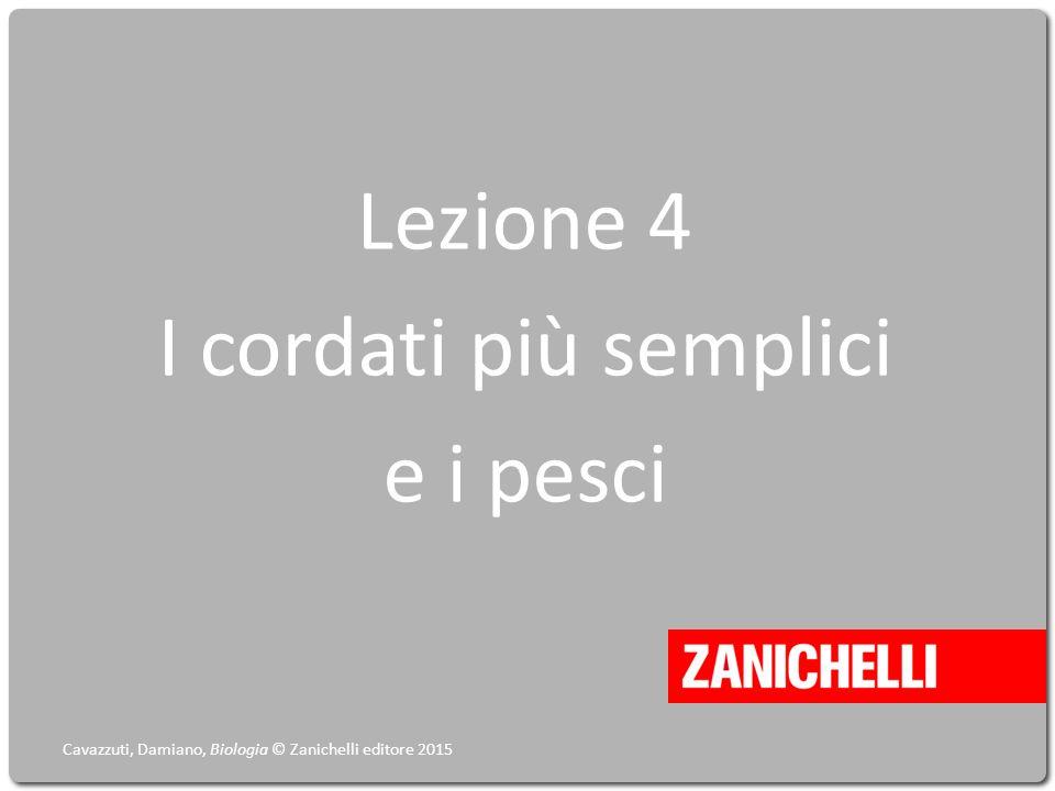 Lezione 4 I cordati più semplici e i pesci Cavazzuti, Damiano, Biologia © Zanichelli editore 2015