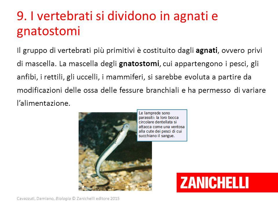 Cavazzuti, Damiano, Biologia © Zanichelli editore 2015 9. I vertebrati si dividono in agnati e gnatostomi Il gruppo di vertebrati più primitivi è cost